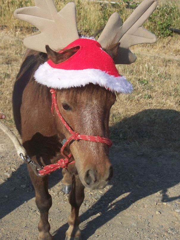 Wombat helping Santa when he was younger. Our miniature party pony with his Christmas hat.