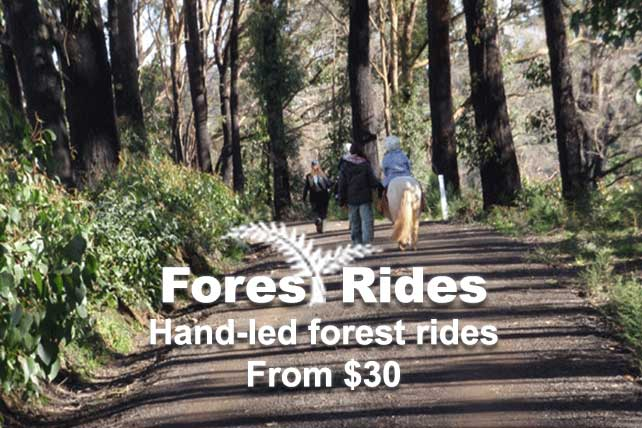 Forest Rides