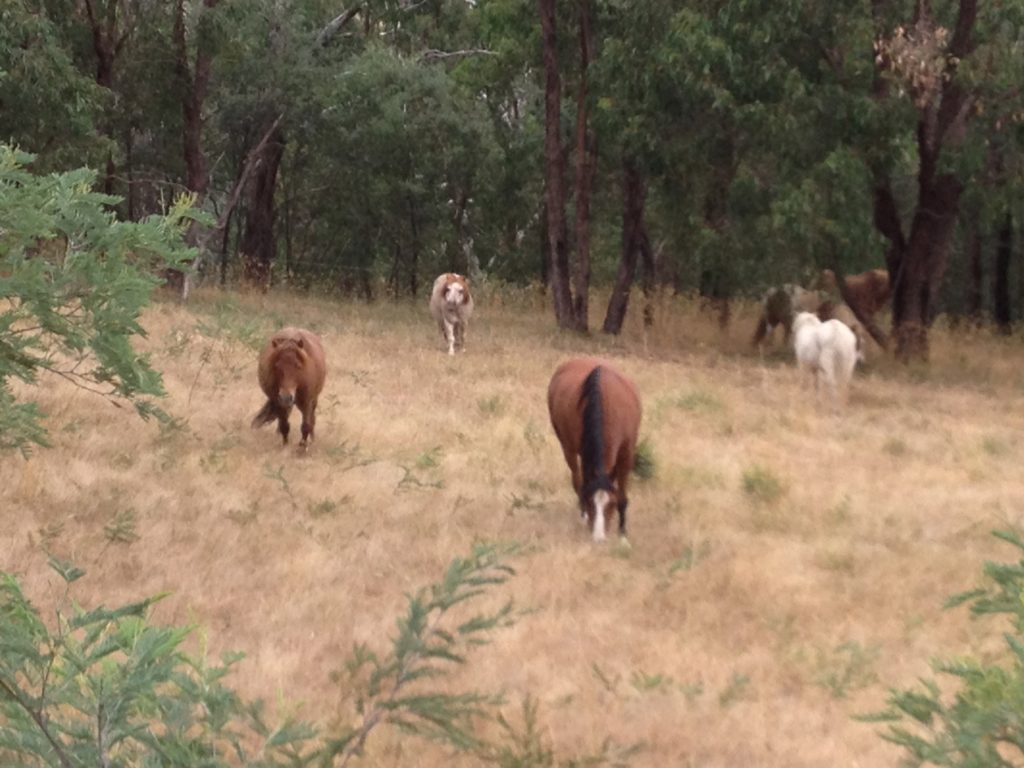 The ponies live in a herd and Banjo is the boss of all the party ponies.